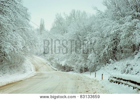 Country Road Woods With Snow.