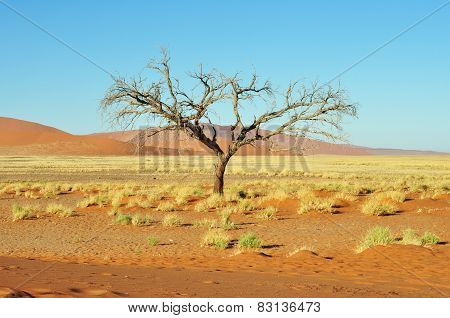 Dead Tree And Dunes