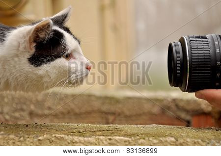 Cat and lens