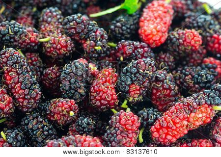 Close Up Organic Mulberry