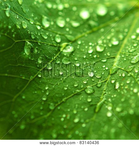 Macro shot of a dewy leaf, ideal for fresh nature backgrounds