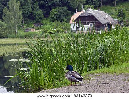 Duck Rest