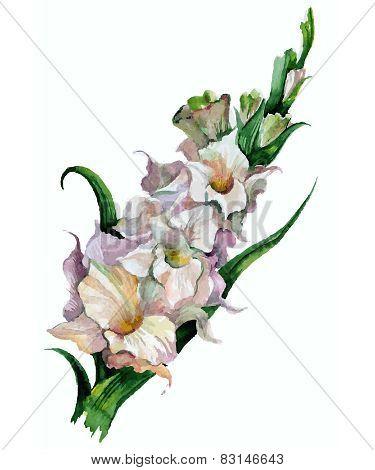 Gladiolus Flowers Painted