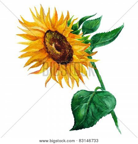 Sunflower Flower Painted By Hand