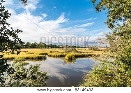 Green Marsh Grasses Under Blue Sky