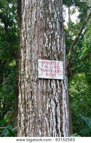 falling mahogany pod sign