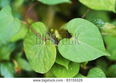 Love Leaf Sign Real Nature