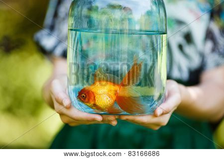 Jar With Gold Fish In Hands
