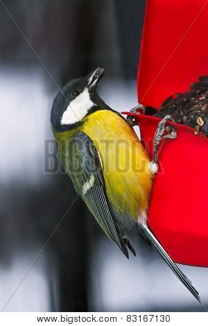 Tit with sunflower seeds on the birdfeeder