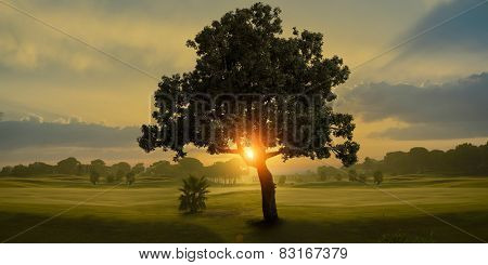 Amazing sunrise and the tree in a golf course