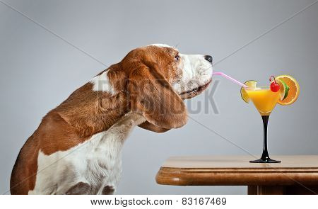 Beagle And Cocktail