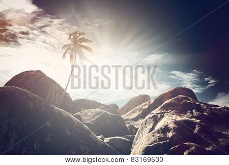 Atmospheric view of a single palm tree and rocks under a dark dramatic sky with sunburst at sunrise on Virgin Gorda, British Virgin Islands, Caribbean