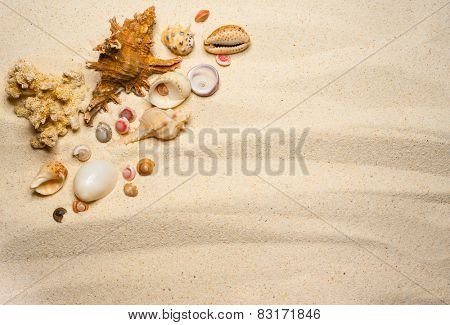 Shells on a wavy sand background