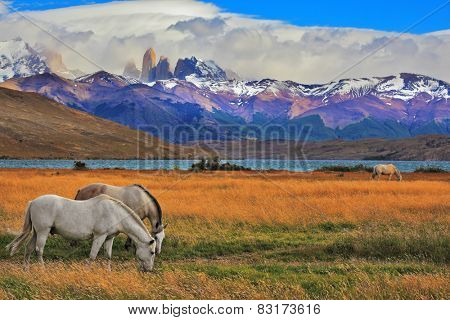 Lake Laguna Azul in the mountains. On the shore of Lake grazing horses. Impressive landscape in the national park Torres del Paine, Chile