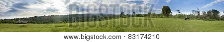 Meadow and forest with cows, 270 degree panorama of Kenya