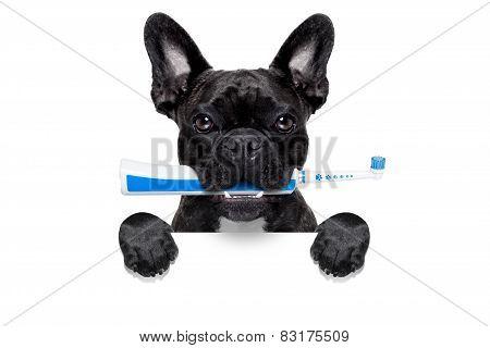 Electric Toothbrush Dog