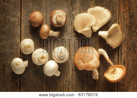 Different kind of mushrooms on a rustic background