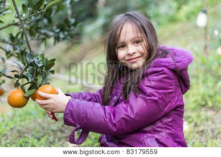 Child On Orange Farm