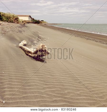 Logs in sand on coastline of Raglan, New Zealand