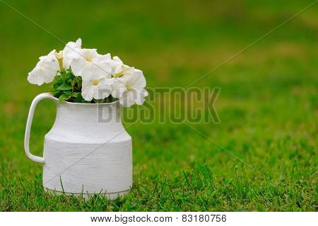Pot With White Petunia Flowers On Green Grass