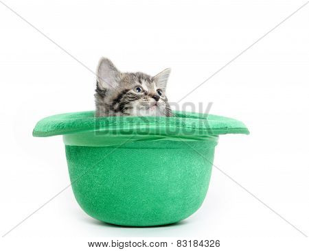 Cute Tabby Kitten In Green Hat