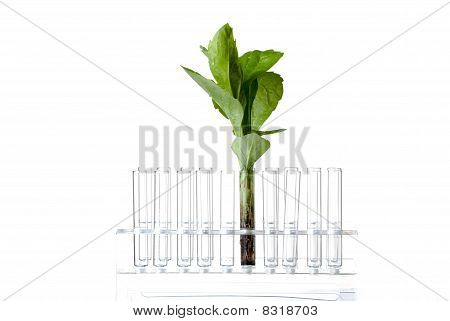 Rack with test tubes and plant