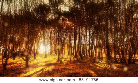Trees in a forest at dawn