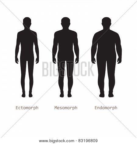 human body anatomy,