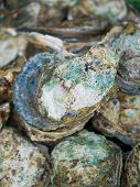 foto of clam  - Freshwater clams mix  of local food in Thailand - JPG