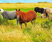 picture of bay horse  - Gray - JPG