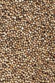 stock photo of chinese parsley  - Dried coriander seeds  - JPG