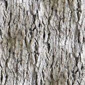 stock photo of white bark  - seamless texture white tree bark wallpaper background art  - JPG