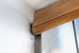 image of spores  - A wall with harmful spreading black mold around the blinds