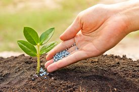 stock photo of humus  - a hand giving fertilizer to a young plant  - JPG