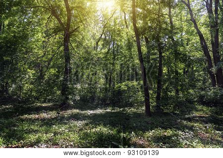 Small Clearing In The Forest Lit By The Sun