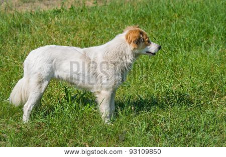 Profile view of young street dog