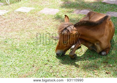 Pony Is Eating Grass