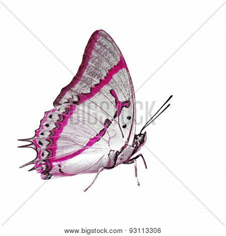 Exotic Color Butterfly Isolated On White Background