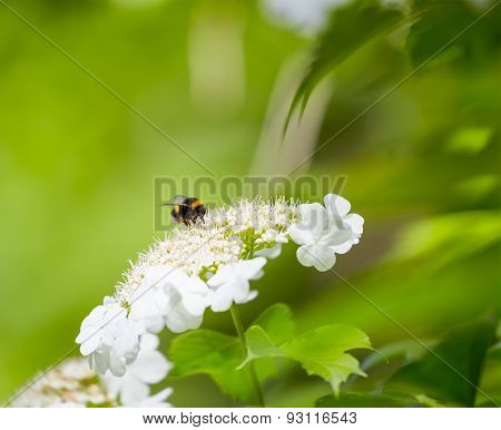 Bumble Bee And Flower On A Beautiful Blurred Background