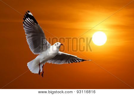 Flying Seagull On Beautiful Sunset Background