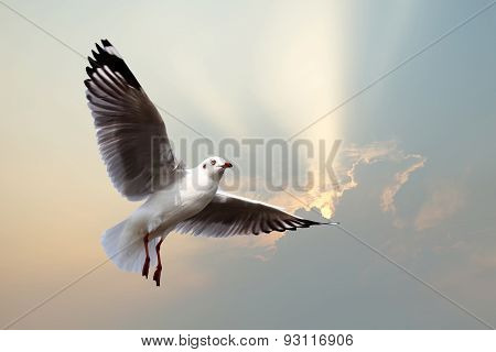 Flying Seagull On Beautiful Sunbeam Background