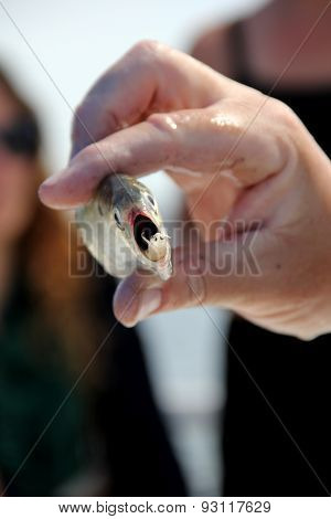 Man's dripping wet hand holding up fish with living organism in it's mouth