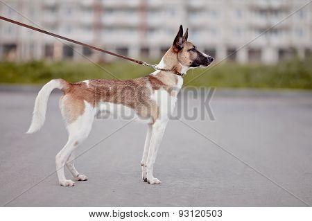 Spotty Domestic Dog