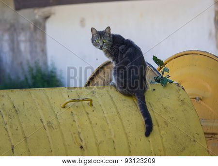 Stray Cat Sitting On A Dustbin