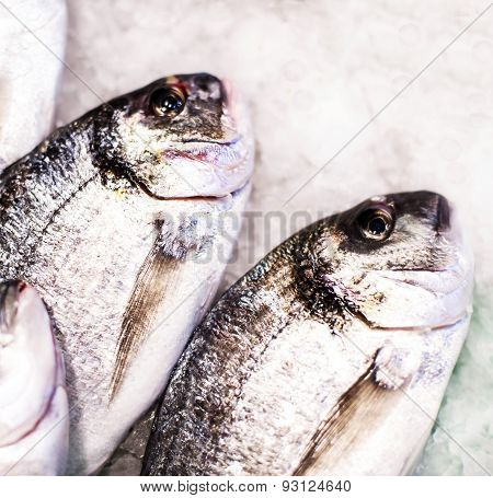 ..seafood On Ice At The Fish Market. Dorado Fish Close Up On White Iced Background - Healthy Food, D