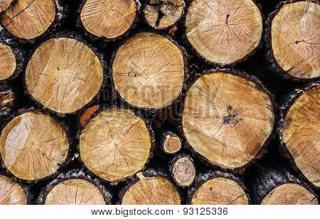 Tree Felling Trees Slices Closeup