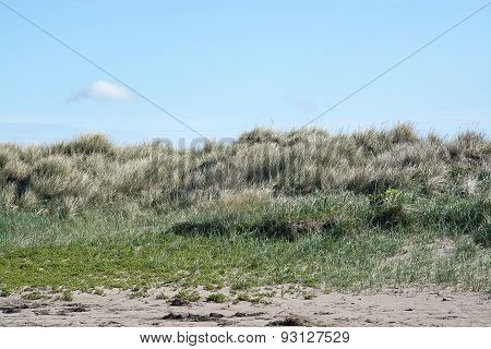 Beach dunes with grass