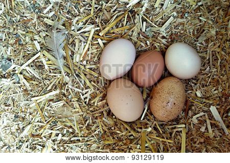 Eggs in the henhouse