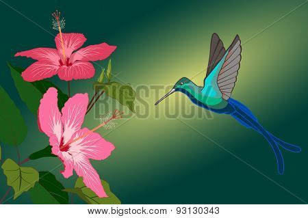 Colorful Hummingbird And Pink Hibiscus Flowers. Vector Illustration.