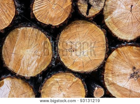 Felled Trees With Knots Closeup Background